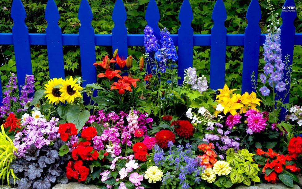 summer-flowers-wallpaper