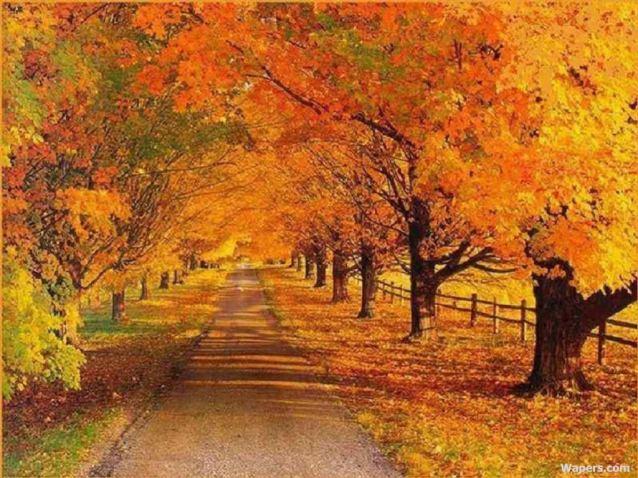 autumn21024